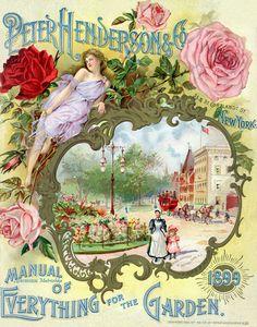 Старинные каталоги цветов.. Обсуждение на LiveInternet - Российский Сервис Онлайн-Дневников