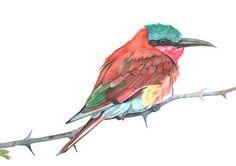 Bee Eater Watercolor Painting  print of watercolor от LouiseDeMasi