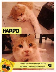 Harpo (ex Fanta) es un gato que estuvo mucho tiempo en el parque, la mayor parte de sus años. Pensamos que iba a ser difícil su adaptación en una casa con una familia y estuvo en tránsito muchos meses... hasta que cayó la voluntaria ideal ! Andre, es parte del grupo y al tiempo quiso adoptarlo, y lo hizo de la mano de su hermana Noelia. Harpo tiene lo que siempre necesitó, una gran familia! (incluyendo hermanos gatunos) Gracias Noe y Andre por adoptar a Harpo
