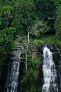 Opaekaa Falls by Dennis Begnoche - Photo taken of Opaekaa Falls on Island of Kauai. Click on the image to enlarge.