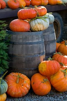 Pumpkin decorating for autumn and Halloween season Harvest Time, Fall Harvest, Harvest Farm, Autumn Day, Autumn Leaves, Hello Autumn, Happy Fall Y'all, Autumn Inspiration, Fall Halloween