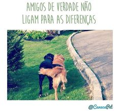 PURA VERDADE! ❤❤❤ #maedepet #paidecachorro #maedecachorro #amocachorro #caopanheiro #filhode4patas #cachorro #gato #cachorroterapia #cachorro étudodebom #petshop #petmeupet #petshoponline