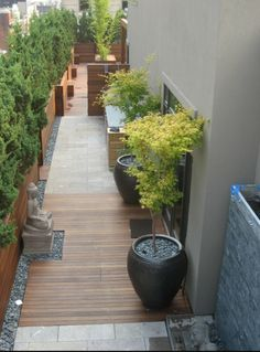 asian style modern garden :: trees as visual barrier, wood and black