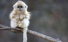 Fluffy Animals Quiz - Sporcle Games & Trivia
