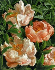 Coral Charm by Mia Tarney Art Floral, Oil Painting Flowers, Painting & Drawing, Botanical Illustration, Botanical Prints, Coral Charm Peony, White Peonies, Flower Art, Watercolor Art