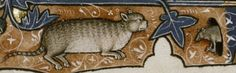 A cat about to pounce on a mouse. From the Ormesby Psalter (13th-14th C.), psalm 101.