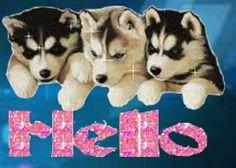 Hello Hello Goodbye, Hello It, Husky, Dogs, Animals, Animales, Animaux, Pet Dogs, Doggies