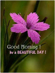 Good morning sweetheart I hope you had a good night and have some good news from your Dr today I LOVE YOU SO MUCH... LUMM...❤️❤️...@