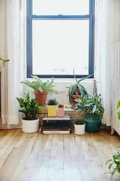 We often get questions from you guys on styling a space. And our answer  often involves... plants! They add life, color, height, texture. But...  green thumbs are a thing. So, we reached out to the experts at The Sill, an  online plant nursery, for advice on selecting and caring for plants.Now  you too can have a gorgeous space with beautiful greens. Instagram here we  come.  1. Always pick your plant based on light.  Cactus  Our #1 rule of (green) thumb is to determine the amount of…