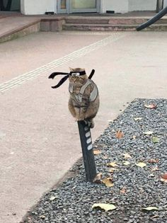 Latest just viral funny memes pictures collection of the day. Check these top 66 hilariously funny pictures memes dump of Funny Animal Jokes, Cute Funny Animals, Funny Animal Pictures, Animal Memes, Funny Cute, Cute Baby Cats, Cute Little Animals, Gato Anime, Cat Icon