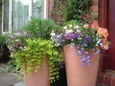 Fogyókúrázók számára is egészséges nassolnivaló a mandula Plants, Google Search, Ideas, Plant, Thoughts, Planets