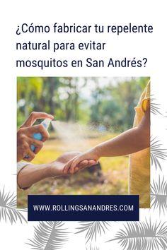 La pregunta del millón: ¿Hay mosquitos en San Andrés? ¿Cómo evitarlos? Prepara tu repelente natural en pocos pasos