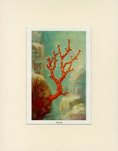 Gorgeous Vintage Coral Print C. 1900 - Antique Lithograph, Reef Ocean Beach Nautical - Wall Art Home Decor Gift Idea - Matted 11x14 by AntiquePrintBoutique on Etsy
