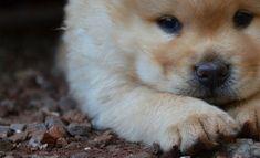 Listado de nombres japoneses para perros con sus significados explicados! Si buscas nombres originales para perritos, nada mejor que uno en japonés! Elige entre