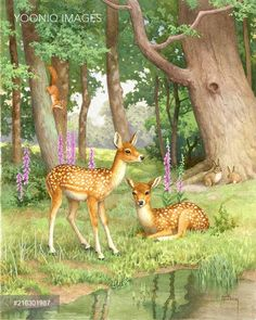 Two fawns by a pool with rabbits and squirrel