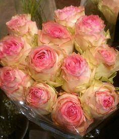 Esperenza Roses