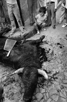 Josef Koudelka. Spain. 1973. Bulls festival.