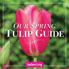 These popular bulbs offer a wide array of colors, shapes, and sizes.