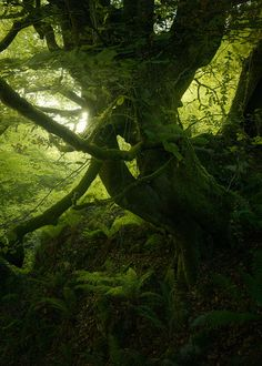 Guardians of the forest by Enrico Fossati