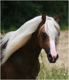 this horse's mane is 5000% more fabulous than your hair.