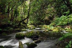 Te Urewera National Park, NZ by Aroha Pounamu, via Flickr