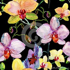 Orchids Stock Photos, Images, & Pictures – (18,685 Images) - Page 14
