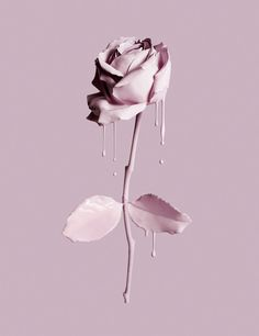 Cosmetics make up makeup pink drip rose. Luxury goods still life photo. By Josh Caudwell, product editorial still life photographer. London, New York, Paris, Milan.