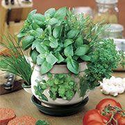 Coltivare le erbe aromatiche in vaso? Puoi farlo anche in casa!