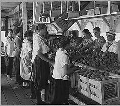 Crate: Blue Mountain Peaches.  WHERE is that farm?!? World War I farmerettes pack peaches on a Virginia fruit farm in August, 1917., 08/1917