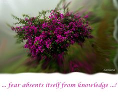 ... #fear absents itself from #knowledge ...!