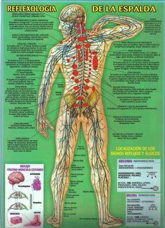 El tratamiento de enfermedades mediante las manipulaciones de Quiromasaje pertenece a unos métodos muy antiguos empleados para ayudar a la recuperación de la salud con métodos naturales. Remontándo…