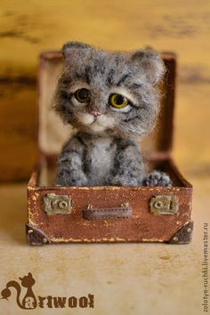 Simon, the needle felted cat, is sitting in suitcase