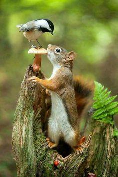 Mushroom, chickadee and a squirrel.
