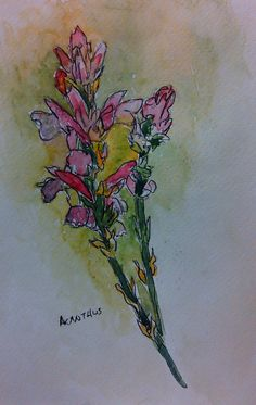 Hand painted watercolor botanical original art by CoggeshallArt, $25.00