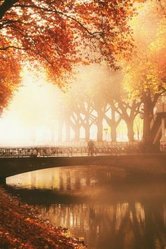 Traumhaft schön - der #Herbst am #Fluss in seiner bezaubernsten Form