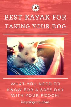 Best Kayak For Dogs 2020 - Top Rated Dog Yaks (inc Inflatables) & Tips Rv Camping Tips, Camping And Hiking, Camping List, Backpacking Tips, Kayaking With Dogs, Kayaking Tips, Taking Dog, Kayak For Beginners, Inflatable Kayak