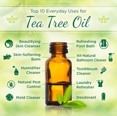 There are a myriad of tea tree oil benefits in today's society. Everything from acne treatments to clearing the air. Tea tree oil is a necessity in one's arsenal of natural medicinal products. Essential Oils For Headaches, Tea Tree Essential Oil, Essential Oil Uses, Doterra Tea Tree Oil, Melaleuca Essential Oil, Tea Tree Oil Uses, Tea Tree Oil For Acne, Tee Tree Oil, Huile Tea Tree