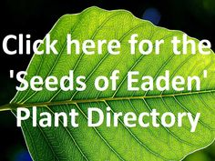 THE 'SEEDS OF EADEN' DIRECTORY