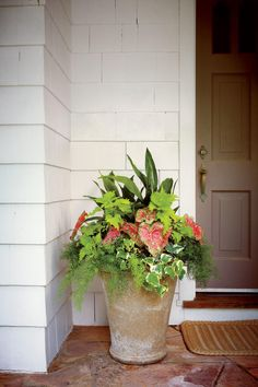 Container Gardening Ideas Shade pot: 'Wasabi' coleus Cast-iron plant 'Pink Beauty' caladium Variegated Algerian ivy Asparagus fern - This shade-loving combo adds color to any entry Cast Iron Plant, Full Sun Plants, Asparagus Fern, Garden Stand, Container Flowers, Succulent Containers, Full Sun Container Plants, Front Yard Landscaping, Landscaping Ideas