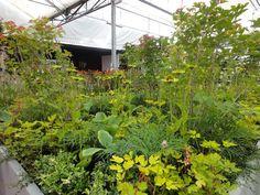 Plantarium Boskoop 2013