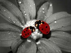Ladybugs....they make me think of my Mom