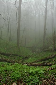 Fog in the Smoky Mountain woods