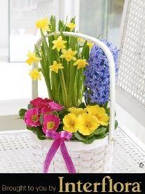 Happy Birthday Spring Planted Basket