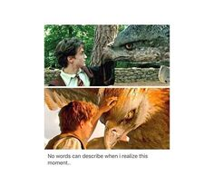 There two types of petting  Harry: let me just put my hand on this carnivores birds nose Newt: aww so cute let me pet you in a area where you can't bite my hand off