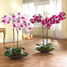 Orchids with beautiful flowers in various colors are wonderful house plants for elegant and sophisticated home decorating Indoor Orchids, Indoor Flowering Plants, Orchids Garden, Artificial Orchids, Elegant Flowers, Exotic Flowers, Beautiful Flowers, Nice Flower, Beautiful Gorgeous