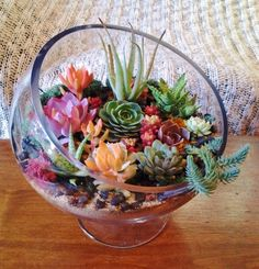 https://flic.kr/p/f9cDVC | Sunshine & Succulents | Succulent terrariums, tiny gardens, and DIY Terrarium Kits! Visit sunshineandsucculents.com