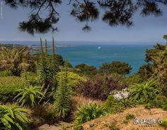 View from The Auberge at Jerbourg, St Martins this afternoon. Great restaurant, great view! Feels like I'm in the Med #Guernsey #GreatThings #LocateGuernsey Link to the whole collection of 'Georgie's Guernsey' :-http://chrisgeorge.dphoto.com/#/album/4daaes Picture Ref: 24_05_16