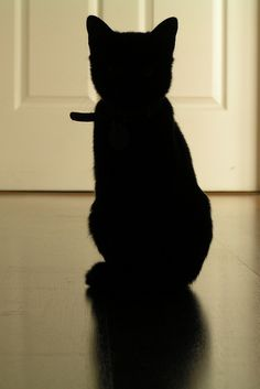 """Cats hate a closed door, you know, regardless of which side their own."" --Lillian Jackson Braun"