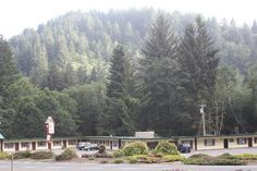 Motel Trees (Klamath, CA)