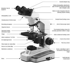 Microscope diagram tom butler technical drawing and illustration choosing a microscope ccuart